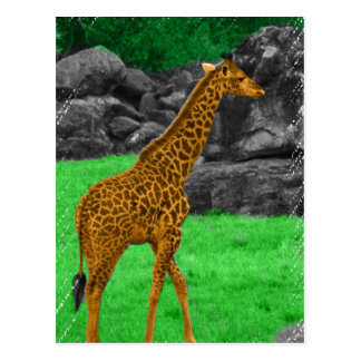 Giraffe photo colorized orange and green postcard