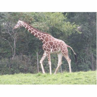 Giraffe Photo Cut Outs