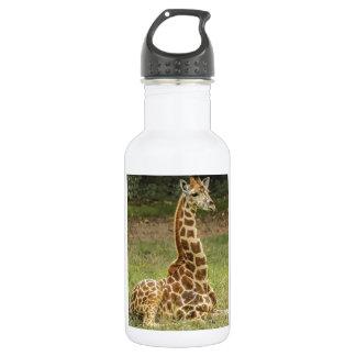 Giraffe Photo Water Bottle