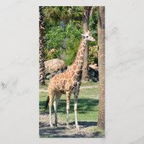 Giraffe photocard
