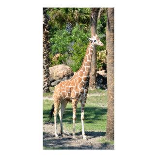 Giraffe photocard card