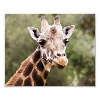 Giraffe Art Photo