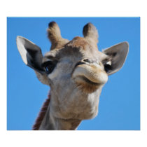 Giraffe photography profile poster