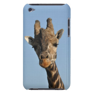Giraffe portrait barely there iPod cover