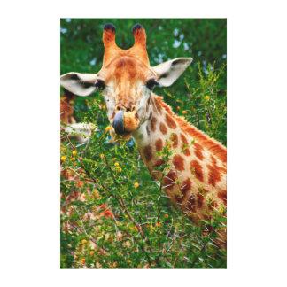 Giraffe Portrait, Kruger National Park Canvas Print