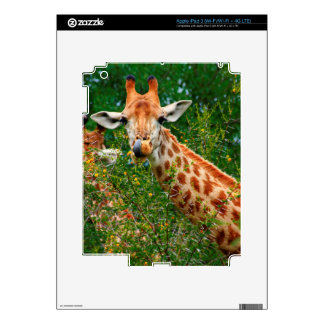 Giraffe Portrait, Kruger National Park Decal For iPad 3