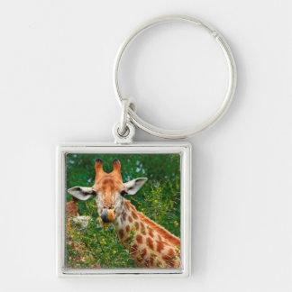 Giraffe Portrait, Kruger National Park Keychain