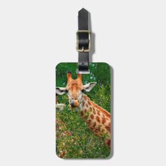 Giraffe Portrait, Kruger National Park Luggage Tag