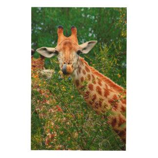 Giraffe Portrait, Kruger National Park Wood Wall Art