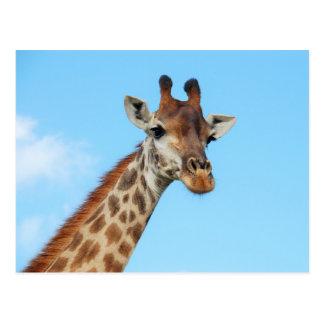 Giraffe portrait postcard