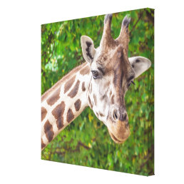 Giraffe Portrait - Wrapped Canvas