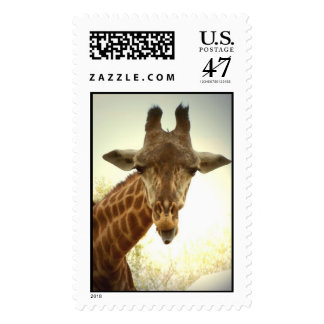 Giraffe Postage