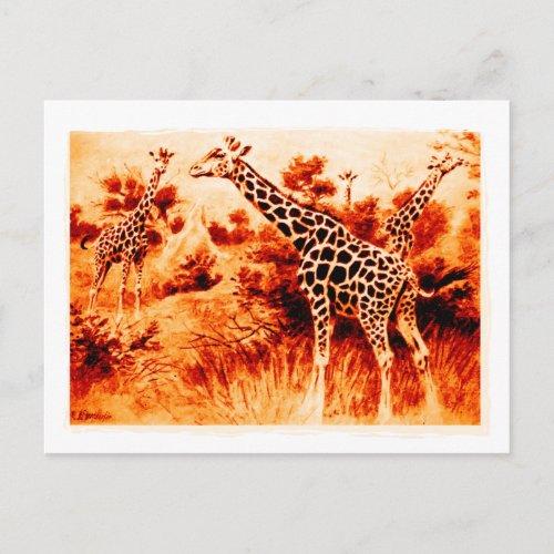 Giraffe Postcard postcard