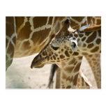 Giraffe • Postcard