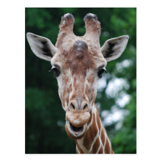 giraffe post cards
