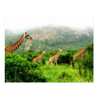 giraffe postkarte tarjeta postal