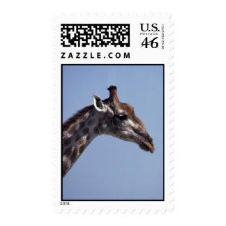 Giraffe Profile Postage
