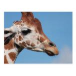 Giraffe Profile Postcard