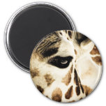 Giraffe Refrigerator Magnets