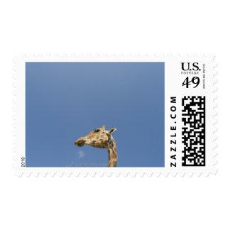 Giraffe s head postage