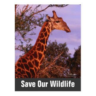 Giraffe Save Our Wildlife Postcard