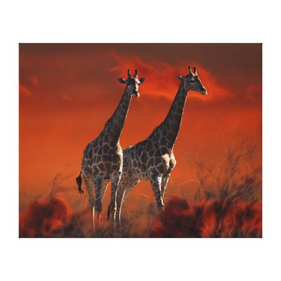 Giraffe series from South African wild life Canvas Print