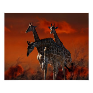 Giraffe series from South African wild life Print