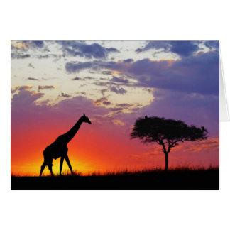 Giraffe silhouetted at sunrise, Giraffa Card