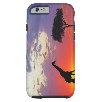 Giraffe silhouetted at sunrise, Giraffa Tough iPhone 6 Case