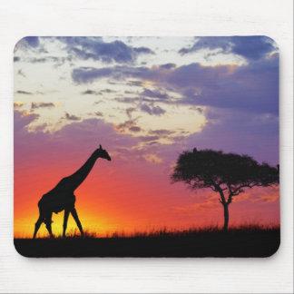 Giraffe silhouetted at sunrise, Giraffa Mouse Pad