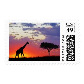 Giraffe silhouetted at sunrise, Giraffa Postage
