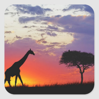 Giraffe silhouetted at sunrise, Giraffa Square Sticker