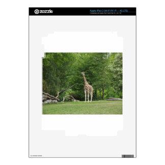 Giraffe Skins For iPad 3