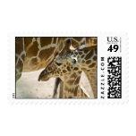 Giraffe • Stamp