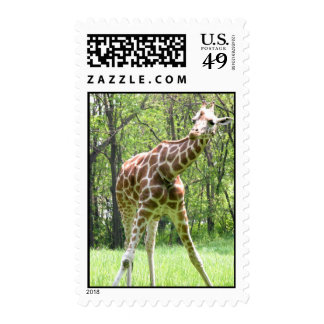 Giraffe Stamps