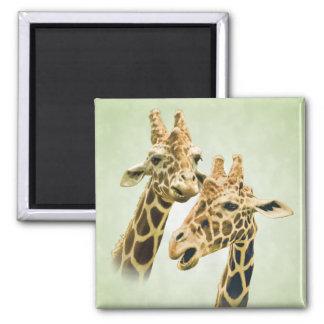 Giraffe Talk 2 Inch Square Magnet