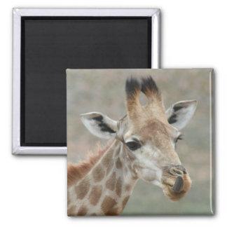 Giraffe Tongue Magnet