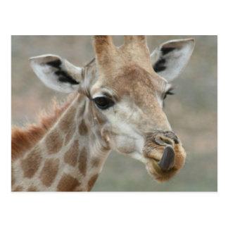 Giraffe Tongue Postcard