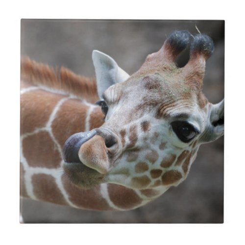 Giraffe Tongue Tile