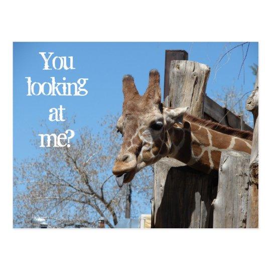 Giraffe Tongues Postcard