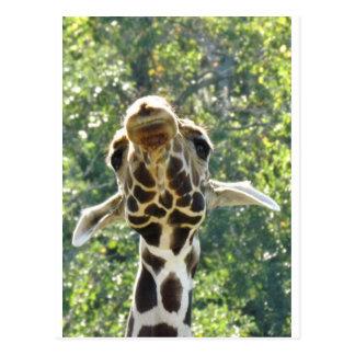Giraffe too.jpg postcard