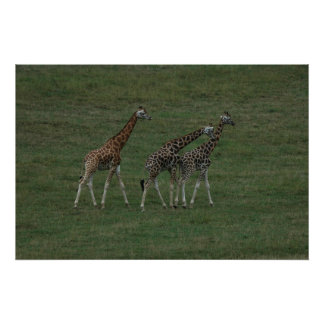 Giraffe Triplets Personalize Destiny Destiny'S Poster
