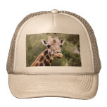 Giraffe trucker's cap trucker hat