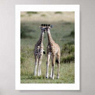 Giraffe Twins Africa Personalize Destiny Destiny'S Poster