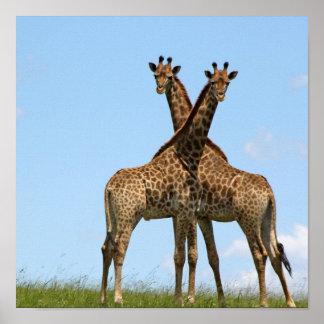 Giraffe Twins Poster