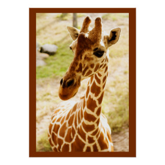 Giraffe Up Close Print