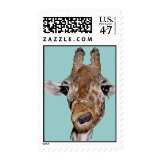 Giraffe US Postage Stamps