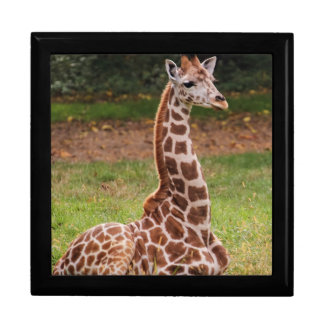 Giraffe Wildlife Animal Photo Jewelry Box