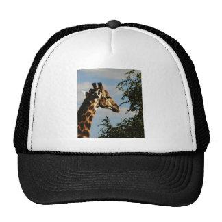 Giraffe wildlife safari hats & caps