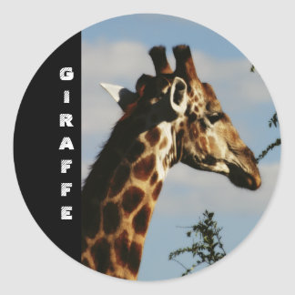 Giraffe wildlife safari stickers